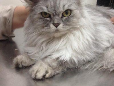 חתול לפני הדבקה